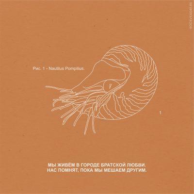 Цитаты из песен группы Nautilus Pompilius